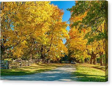 Maple Season Canvas Print - Country Lane by Steve Harrington