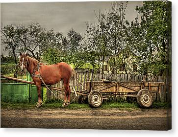 Country Life Canvas Print by Evelina Kremsdorf