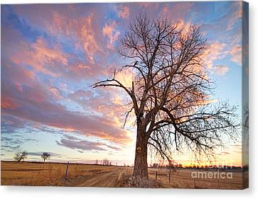 Country Morning High Canvas Print by James BO  Insogna