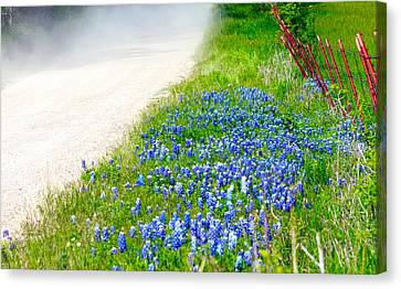 Country Road Bluebonnet Patch Canvas Print by Lorri Crossno