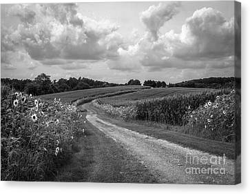Country Road Canvas Print by Chris Scroggins