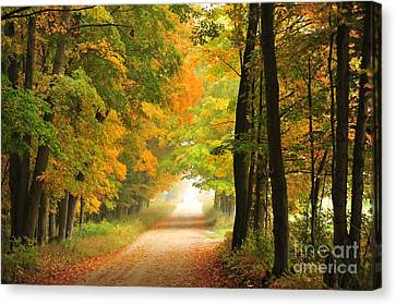 Canvas Print featuring the photograph Country Road In Autumn by Terri Gostola