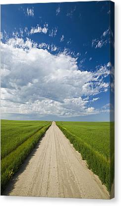 Country Road Through Grain Fields Canvas Print by Dave Reede