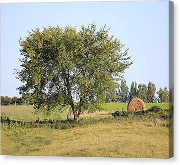 Canvas Print featuring the photograph Country Scene by Penny Meyers