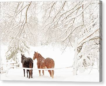 Country Snow Canvas Print by Cheryl Baxter
