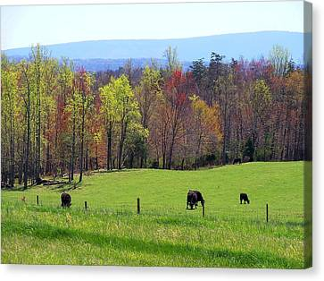 Canvas Print featuring the photograph Countryside In Spring by Kathryn Meyer