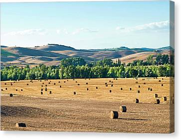 Bales Canvas Print - Countryside Near San Qurico D'orcia by Nico Tondini