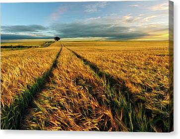 Countryside Canvas Print by Piotr Krol (bax)