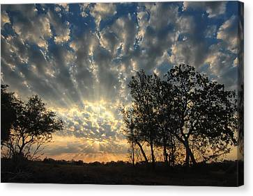 Countryside Sunrise Canvas Print by Susan D Moody