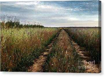 Countryside Tracks Canvas Print by Carlos Caetano