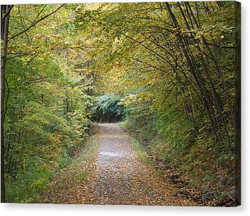 County Path Canvas Print by Catherine Gagne