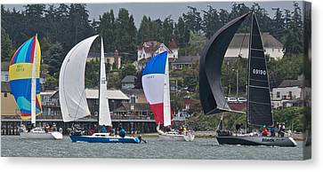 Oak Harbor Canvas Print - Coupeville Regatta by Steven Lapkin