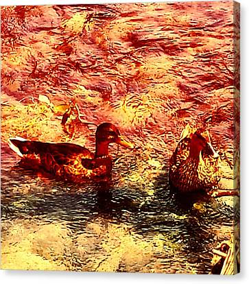 Couple Of Ducks Canvas Print by Jason Michael Roust