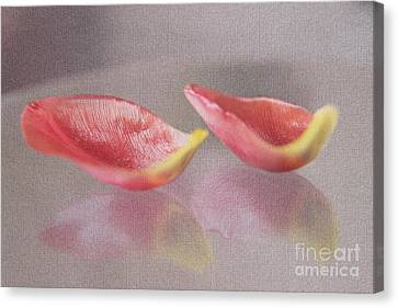 Couple Of Red Tulip Petals Canvas Print by Eden Baed