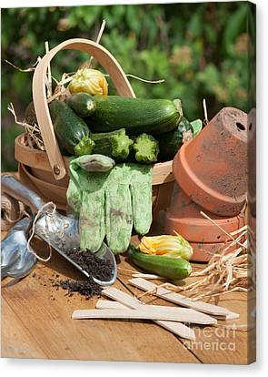 Courgette Basket With Garden Tools Canvas Print by Amanda Elwell