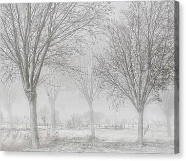 Covered With A White Quilt Canvas Print