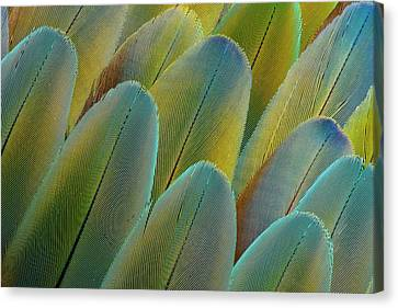 Covert Wing Feathers Of The Camelot Canvas Print by Darrell Gulin