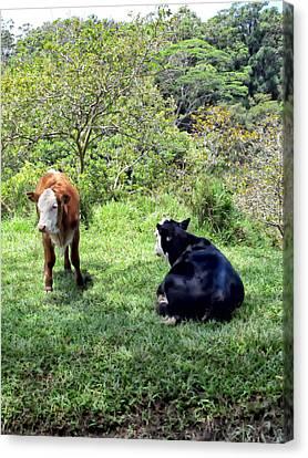 Canvas Print featuring the photograph Cow 4 by Dawn Eshelman