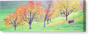 Cow Cantone Zug Switzerland Canvas Print by Panoramic Images