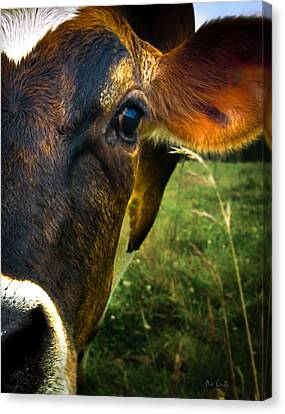 Fun Canvas Print - Cow Eating Grass by Bob Orsillo