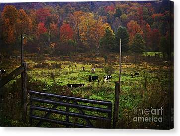 Canvas Print featuring the photograph Cow Pasture In Autumn by Debra Fedchin