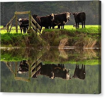 Canvas Print featuring the photograph Cow Reflections by Suzy Piatt