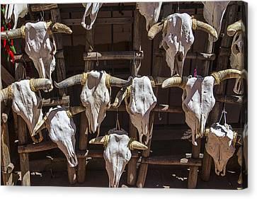 Cow Skulls Canvas Print