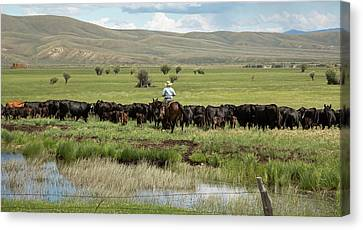 Cowboy Herding On A Cattle Ranch Canvas Print by Jim West