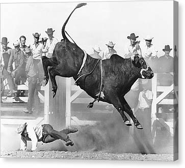 Cowboy Riding A Bull Canvas Print by Underwood Archives
