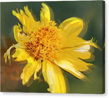 Cowpen Daisy No. 4 Canvas Print