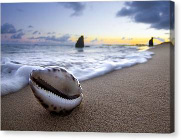 Cowrie Sunrise Canvas Print by Sean Davey