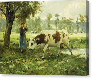 Cows At Pasture  Canvas Print by Julien Dupre