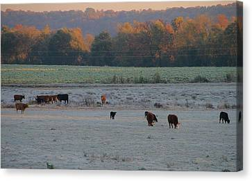 Cows At Sunrise Canvas Print by Dan Sproul