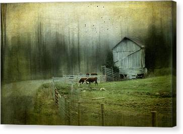 Cows By The Road Canvas Print by Kathy Jennings