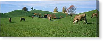 Cows Grazing On A Field, Canton Of Zug Canvas Print by Panoramic Images