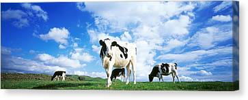 Cow Canvas Print - Cows In Field, Lake District, England by Panoramic Images