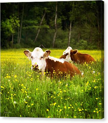 Cows In Meadow Canvas Print by Christina Rollo