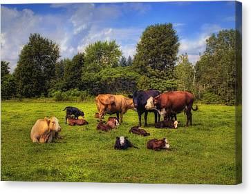 Cows Out To Pasture Canvas Print by Joann Vitali