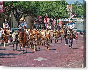 Longhorn Canvas Print - Cowtown Cattle Drive by David and Carol Kelly