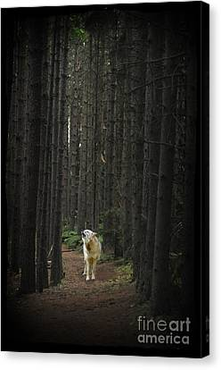 Coyote Howling In Woods Canvas Print by Dan Friend