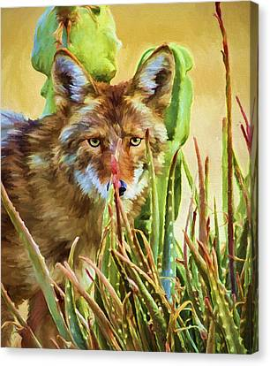 Coyote In The Aloe Canvas Print