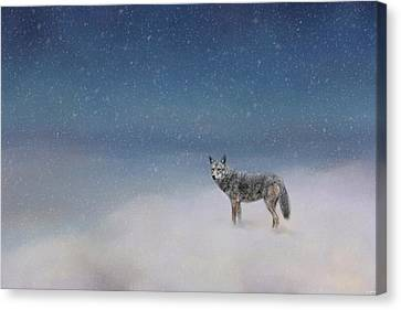 Coyote In Winter Canvas Print by Jai Johnson