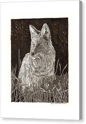 Coyote Night Hunting Canvas Print by Jack Pumphrey