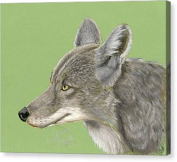 Coyote Canvas Print by Ruth Seal