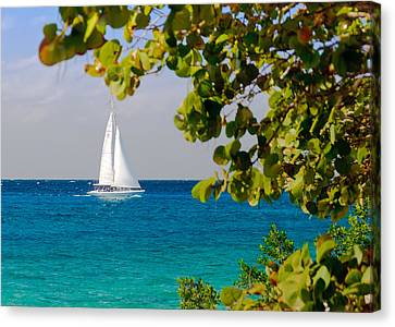 Cozumel Sailboat Canvas Print by Mitchell R Grosky