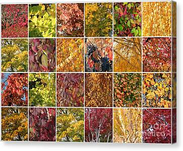 Cozy Autumn Leaves Collage Canvas Print by Carol Groenen