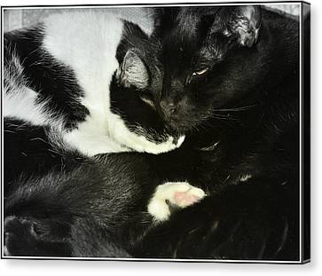 Litter Mates Canvas Print - Cozy by Kathy Barney