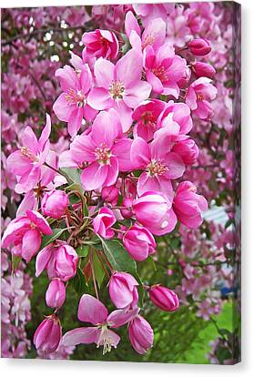 Crab Apple Blossoms Canvas Print by Aimee L Maher Photography and Art Visit ALMGallerydotcom