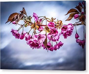 Crab Apple Tree Canvas Print by Bob Orsillo