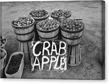 Crab Apples Canvas Print by Bill Cannon